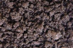 Dry soil closeup stock photo