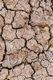 Dry soil. Royalty Free Stock Photography