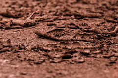 Dry soil closeup before rain Royalty Free Stock Photography