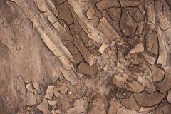 Dry soil closeup before rain Royalty Free Stock Images