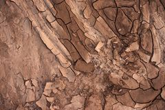 Dry soil closeup before rain Stock Photo