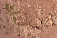Dry soil closeup before rain Royalty Free Stock Images