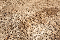 Dry soil crack texture land area, can use as background agricult Royalty Free Stock Image