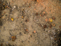 Dry soil cracked surface with dry leaves Stock Images
