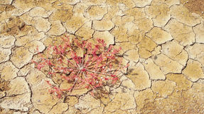 Dry soil cracking and red grass Royalty Free Stock Photos