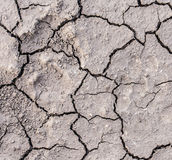 Dry soil cracks Stock Images