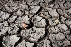 Dry soil with dramatic cracks caused stock images