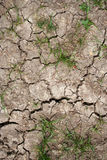 Dry soil and grass Royalty Free Stock Photography