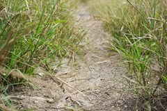 Dry soil and green grass Royalty Free Stock Image
