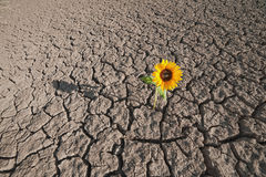 Dry soil and growing plant Stock Photo