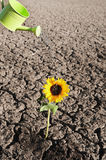 Dry soil and growing plant Royalty Free Stock Photos