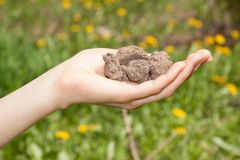 Dry soil in hand Royalty Free Stock Images