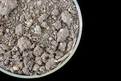 Dry soil in petri dish isolated on black background Royalty Free Stock Photos