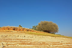 Dry soil and tree landscape, Portalegre, Portugal. Dry soil and pine tree the coast of  `Baragem de  Montargil`  lake near Portalegre, Portugal, on a sunny day Stock Photo