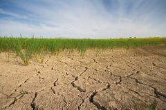 Dry soil rice farm Stock Photography