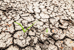 Dry soil surface. Royalty Free Stock Photo