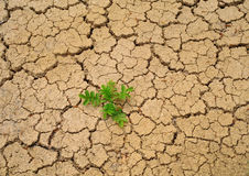 Dry soil. Stock Photos