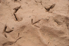 Dry soil texture background Royalty Free Stock Photography
