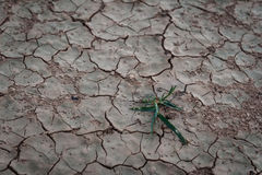 Dry Soil Royalty Free Stock Photography