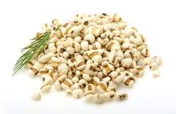 Dry soya beans Stock Image