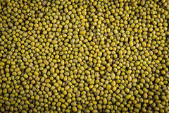 Dry split green lentils texture Royalty Free Stock Images