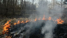 Dry spring grass danger burning near forest Stock Images