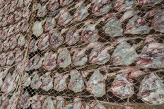 Dry squid. Dried Squid, traditional squids drying in a idyllic fishermen village,Thailand Royalty Free Stock Images