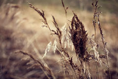 Dry stalks Stock Photos