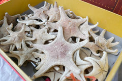 Dry starfish in the box Royalty Free Stock Photo