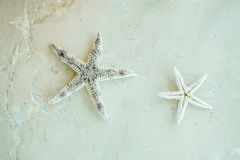 Dry starfish Royalty Free Stock Images
