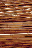 Dry stems. Close-up of a pile of stems in sunlight Royalty Free Stock Photography
