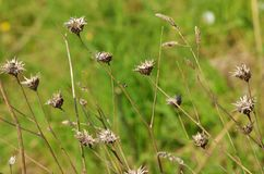 Dry stems of plants. They grow up in a wild field Stock Photo