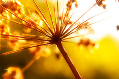 Dry stems of wild autumn flowers in sunlight Stock Photos