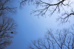 dry stick tree Stock Image