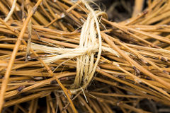 Dry sticks Royalty Free Stock Images