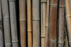 Dry sticks of bamboo Royalty Free Stock Image