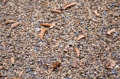 Dry stone on the ground Royalty Free Stock Photography