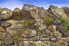 Dry Stone Wall,Blue Sky Purple Flowers Stock Photo