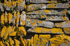 Dry Stone Wall. Close-up of a dry stone wall covered in orange lichen Royalty Free Stock Photo