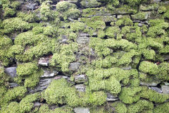 Dry Stone wall heavily covered in moss in the Lake District. Dry stone wall heavily covered in moss being used as a field divider in Lake District farmland Royalty Free Stock Image