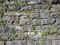 Dry stone wall with plants Royalty Free Stock Images