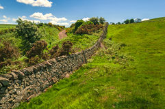 Dry Stone Wall Rolling Green Meadow Royalty Free Stock Image