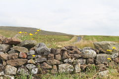 Dry Stone Wall. A view of a dry stone wall in with wildflowers growing out of it and green hills in the background Stock Photos