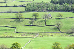 Dry stone walled fields Royalty Free Stock Image