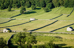 Dry Stone Walls and Barns - Yorkshire Dales, England,. Dry stone walls and barns, a typical feature of the landscape of the Yorkshire Dales, England Stock Images
