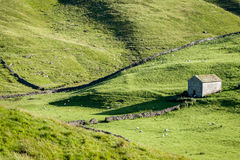 Dry Stone Walls and Barns - Yorkshire Dales, England,. Dry stone walls and barns, a typical feature of the landscape of the Yorkshire Dales, England Royalty Free Stock Photos
