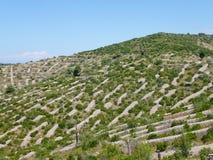 Dry stone walls on the Croatian isle Hvar Stock Image