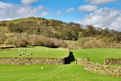 Dry stone walls surrounding pastures Royalty Free Stock Photos