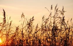 Dry straw Stock Photos