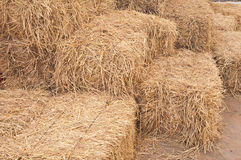 Dry straw. At the barn Stock Images